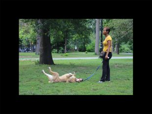 dog-days-IMG_2412_1200x900